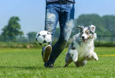 Hunde halten Besitzer auf Trab